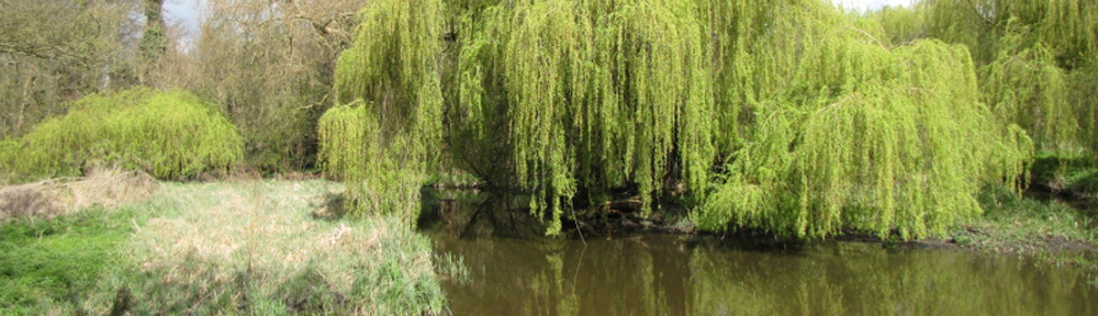 Banner-Bridge-View-Cassiobury-Park